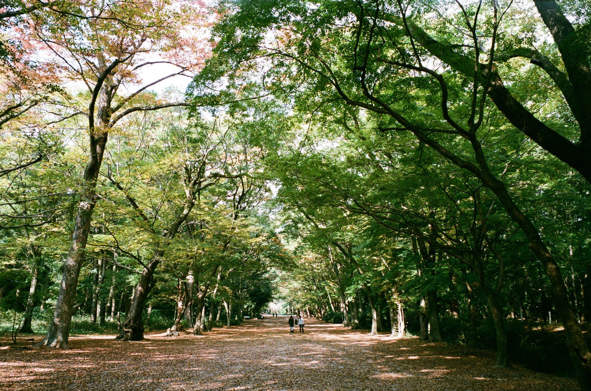 糺の森,2014